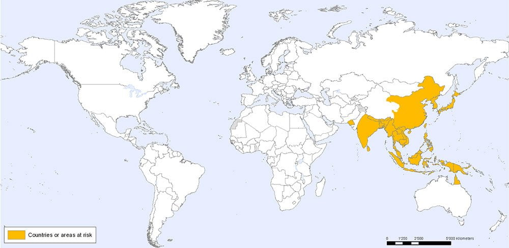 JAPANESE ENCEPHALITIS COUNTRIES AT RISK world map